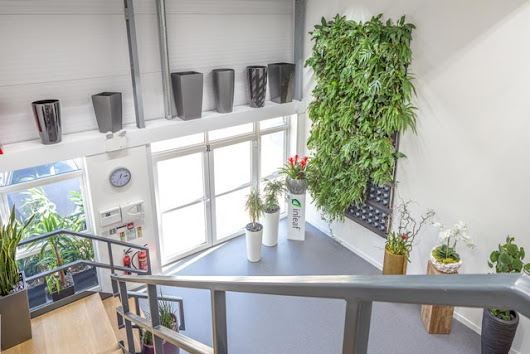 Inleaf's showroom opens — featuring large living wall — Office Plants, Living Walls & Interior Landscaping — Inleaf