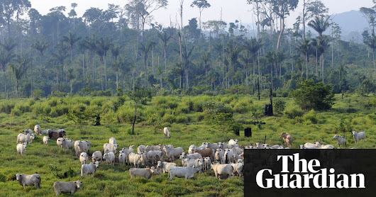 Avoiding meat and dairy is 'single biggest way' to reduce your impact on Earth | Environment | The Guardian