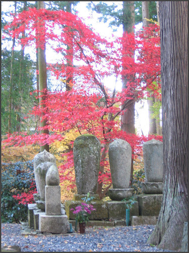 photo number 52: graves and momiji. CLICK to go to the Album START !