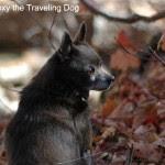 Roxy - Roxy the Traveling Dog