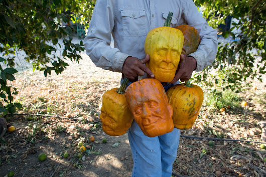 Pumpkinsteins, California-Grown Pumpkins Shaped Like the Head of Frankenstein's Monster