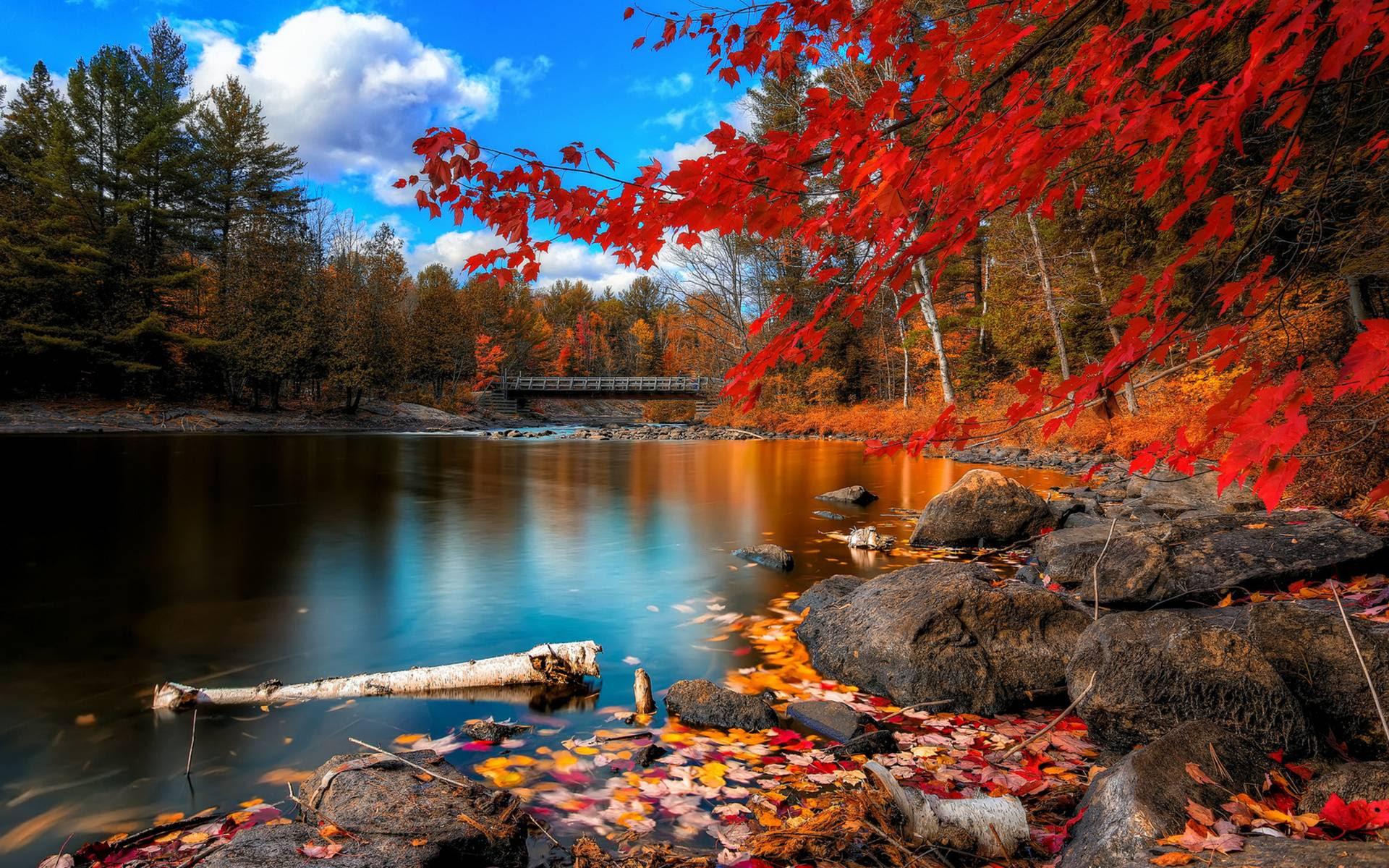 Resultado de imagem para Fall-Season