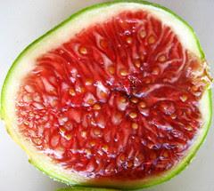 adriatic fig
