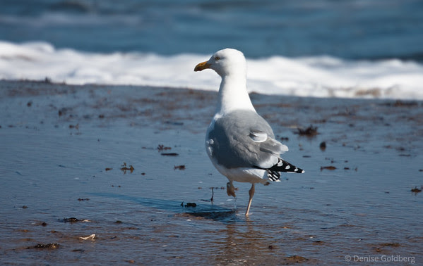 sea gull posing