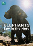 Elephants: Spy in the Herd | filmes-netflix.blogspot.com