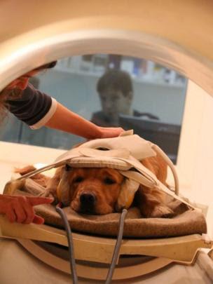 Perro dentro del escáner.