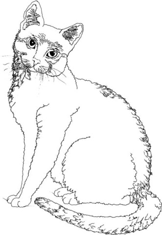 cat 5 coloring page