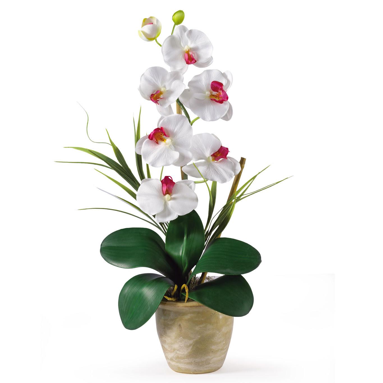 21\u0026quot; Phalaenopsis \u0026 Dendrobium Orchid Silk Flower