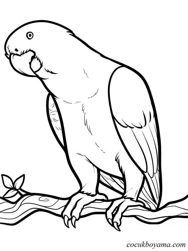Muhabbet Kuşu 6 ücretsiz Boyama Resimleri