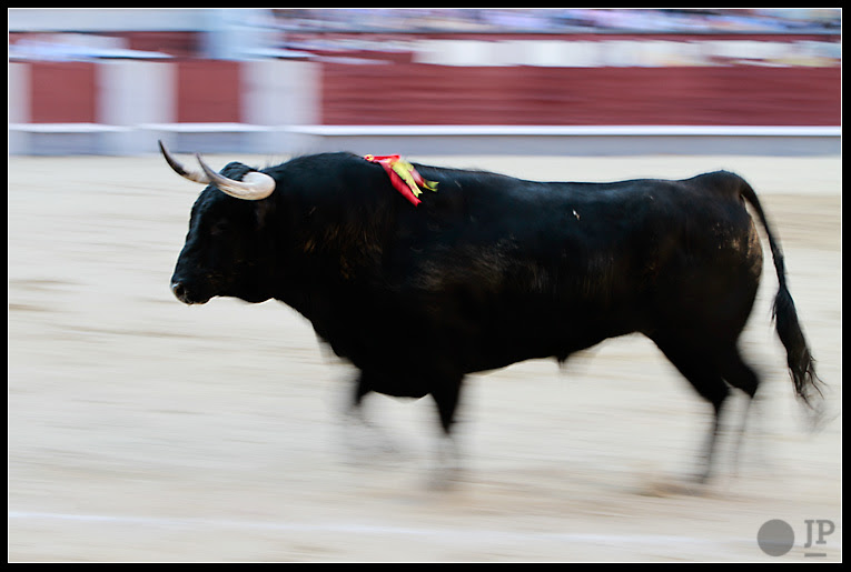 Toro-de-Valdefresno-8