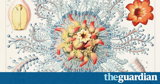 Ernst Haeckel: the art of evolution – in pictures | Books | The Guardian