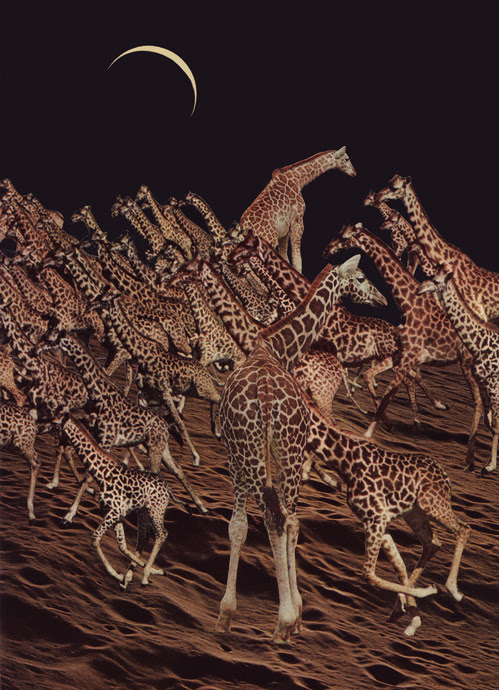 Beth Hoeckel | bethfromabove - Giraffic park [Tumblr Monday with oxane]