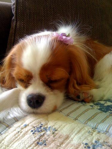 Daisy as Lilac