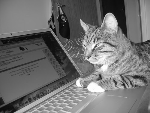 Macintosh: So great, even your cat wants one.