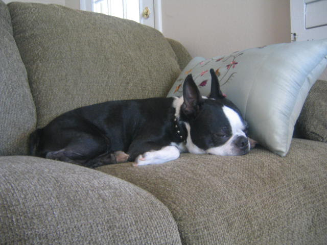 Joey likes the new couch and the new pillows