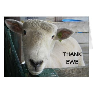 MUTTON MORE TO SAY - THANK EWE GREETING CARD