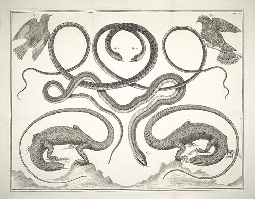 illustrated snake + lizard species - decorative design