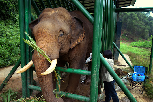 No. 1 Most Expensive Coffee Comes From Elephant's No. 2