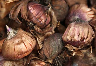 How (and When) to Plant Flower Bulbs | Planet Natural