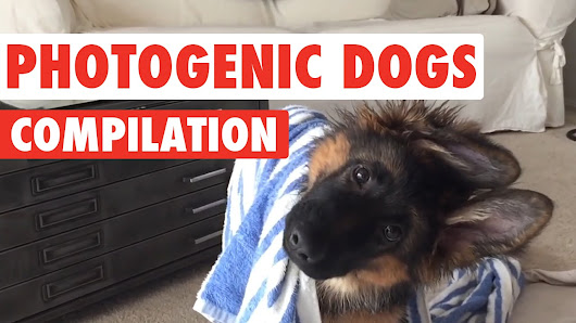 Photogenic Dogs Video Compilation 2016 - YouTube