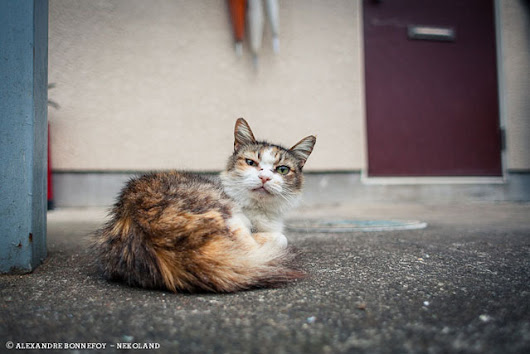 Photographer Turns His Lens on Cute and Sassy Alley Cats in Japan