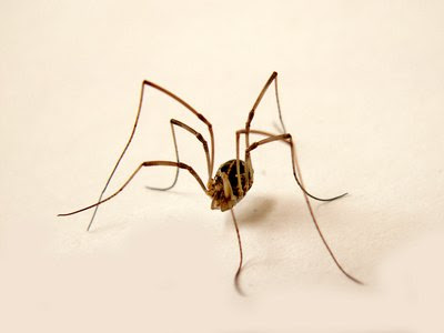 Natural Home Remedies to Kill Spiders | eHow