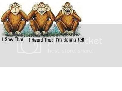 three monkeys Pictures, Images and Photos