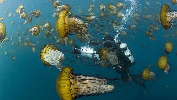 Imagem da exposição 'Oceanos', que traz imagens inéditas do fundo do mar e abre no Centro Cultural Correios, no Rio, em 17 de maio de 2012 (Foto: Richard Herrmann )