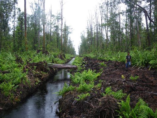 Aceh unveils protected area in beleaguered Tripa peat swamp