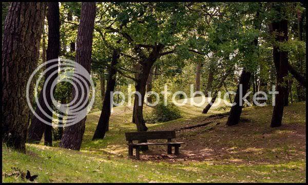 Parc pins centre ville Touquet