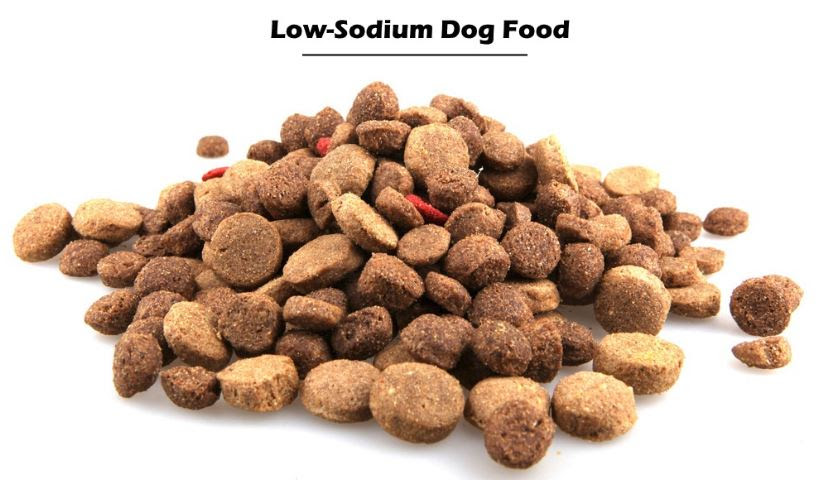 The Best Low Sodium Dog Food Brands - Small Animal Planet