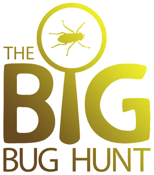 The Big Bug Hunt - Garden Pest Warnings