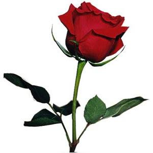 Cómo Limpiar Una Rosa