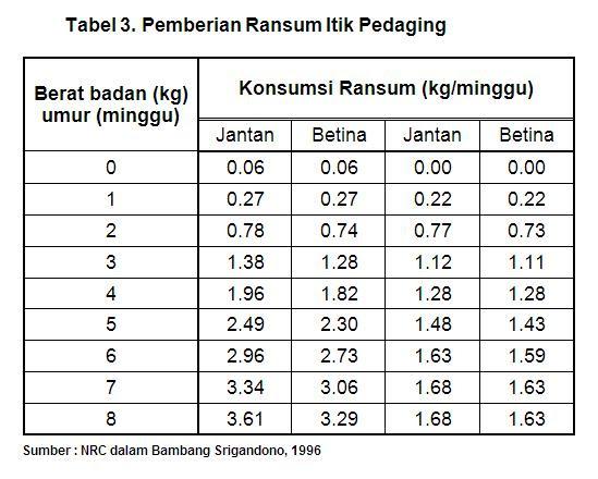 4 Cara Ternak Bebek Terbukti Berhasil - Dosen Ilmu Peternakan Indonesia
