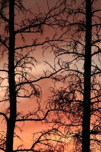 Stark Against a Fiery Sky (SOTC 56/365) by gina.blank