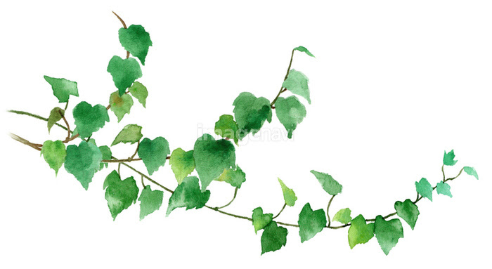 観葉植物アイビーの画像素材31112513 イラスト素材ならイメージナビ