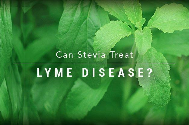 Study Finds that Stevia Could Kill Lyme Disease