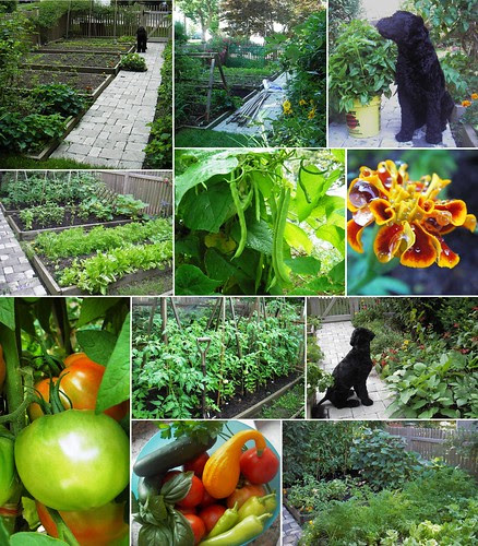 garden 2006