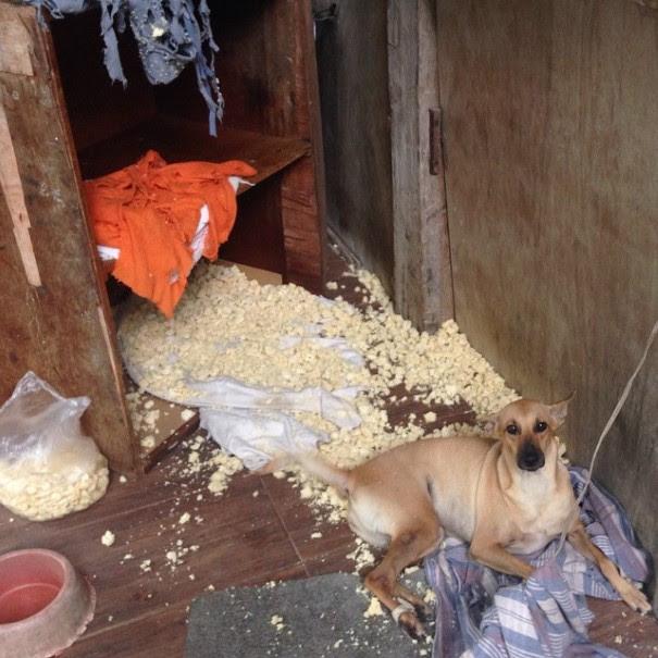 cachorro-envergonhado-19
