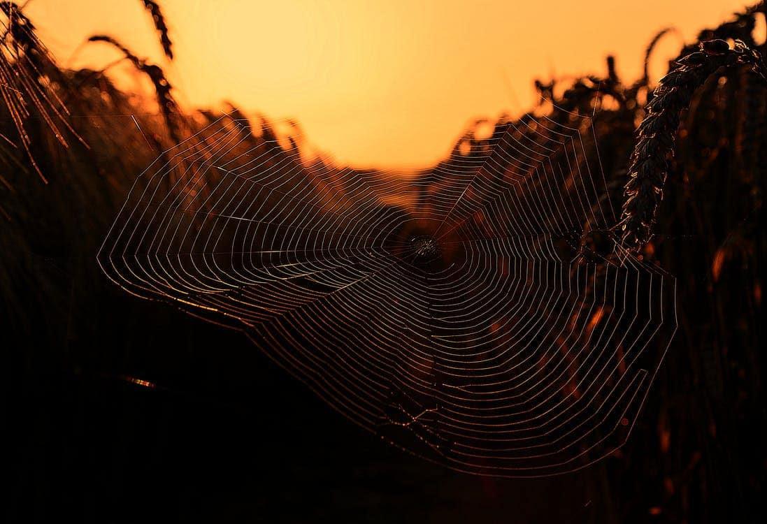 spider pest control arizona