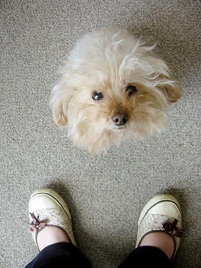 Poodle Head, Human Feet