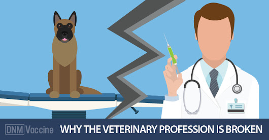 Why Vets Are Getting Away With Murder - Dogs Naturally Magazine