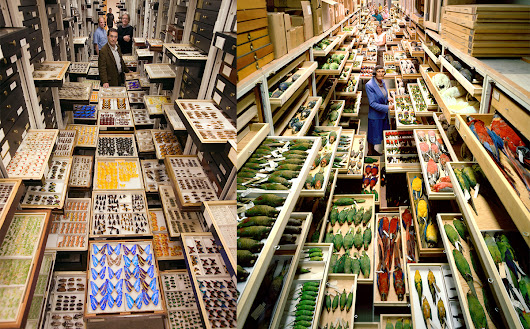 Amazing Photos of the Smithsonian's Massive Specimen Collections in DC