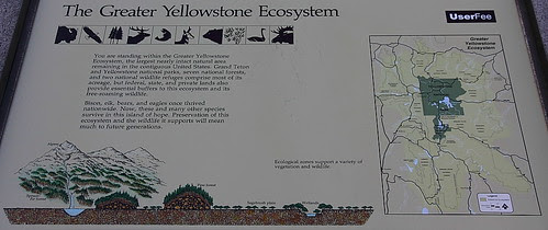 IMG_7644 Greater Yellowstone Ecosystem