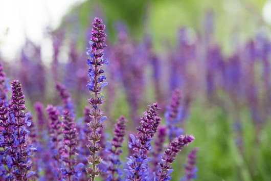 6 Perfect Perennial Flowers for Perennial Gardening Month | Millcreek Gardens