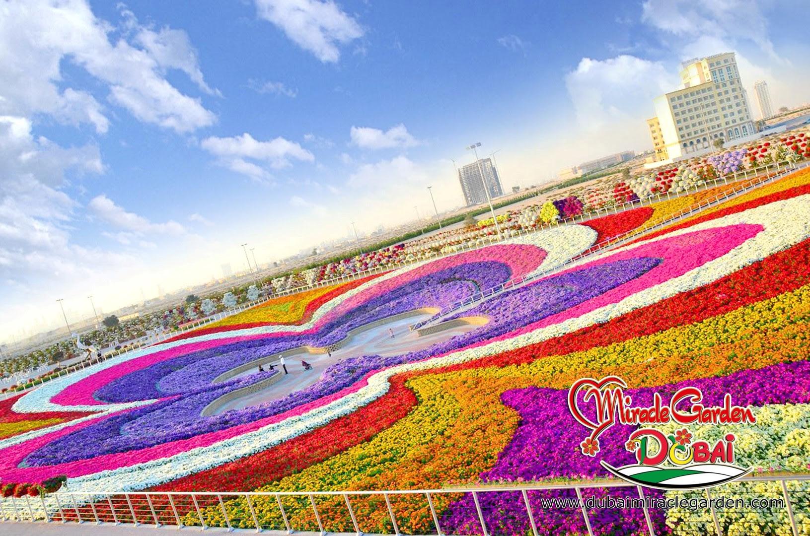 Dubai Miracle Garden 07