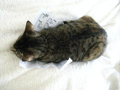 """""""If I lay on the grocery list then she has to pay attention to me!"""""""