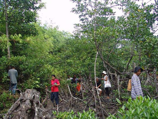 A lesson from Sri Lanka on saving mangroves