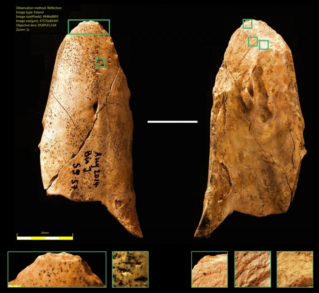 Bone Tool Discovered by University of Montreal Researchers (image)