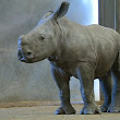 Two rhinos born at safari park